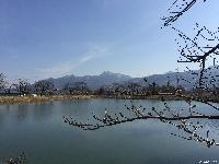治田公園の桜はまだつぼみです