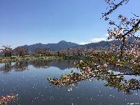 治田公園の桜はかなり散ってしまいました